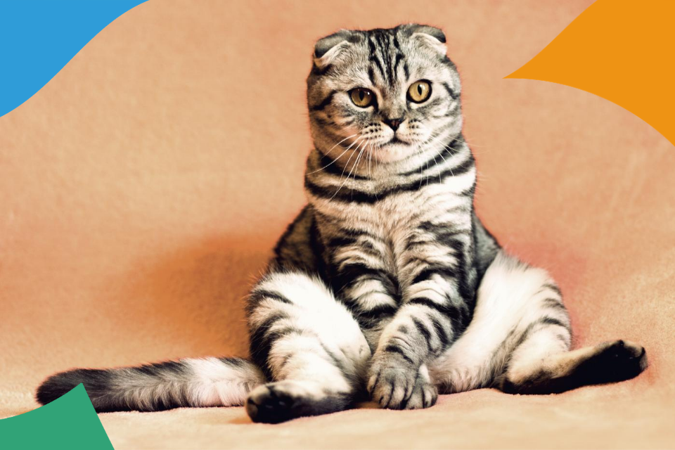 Сто веков вместе. История домашних кошек