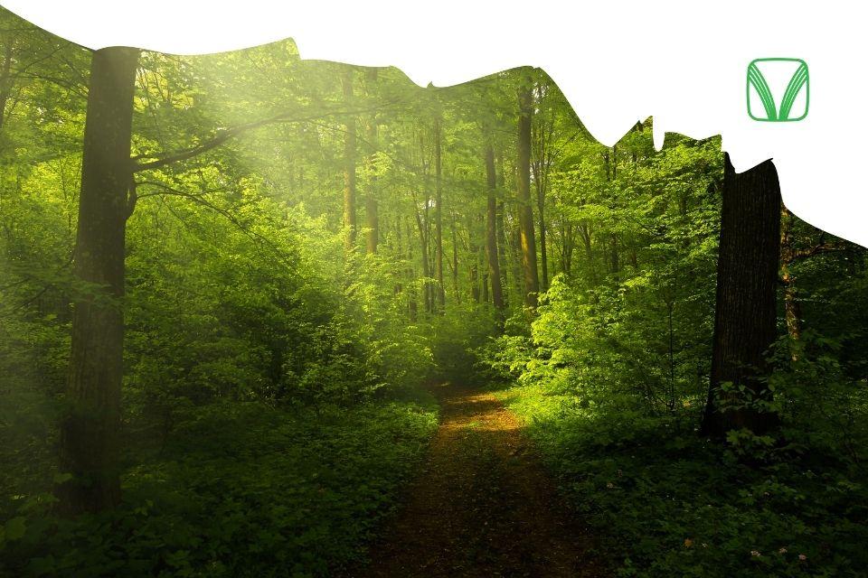 Зелёная мультиподборка от Гармонии