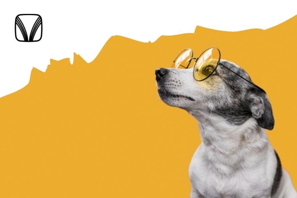 Как собаки показывают свои эмоции